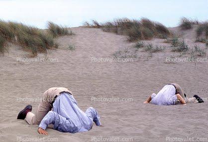 Ostrich Bury Head In Sand